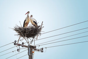 web-White-Storks-In-Nest